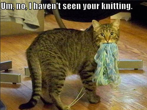Kitty-yarn2