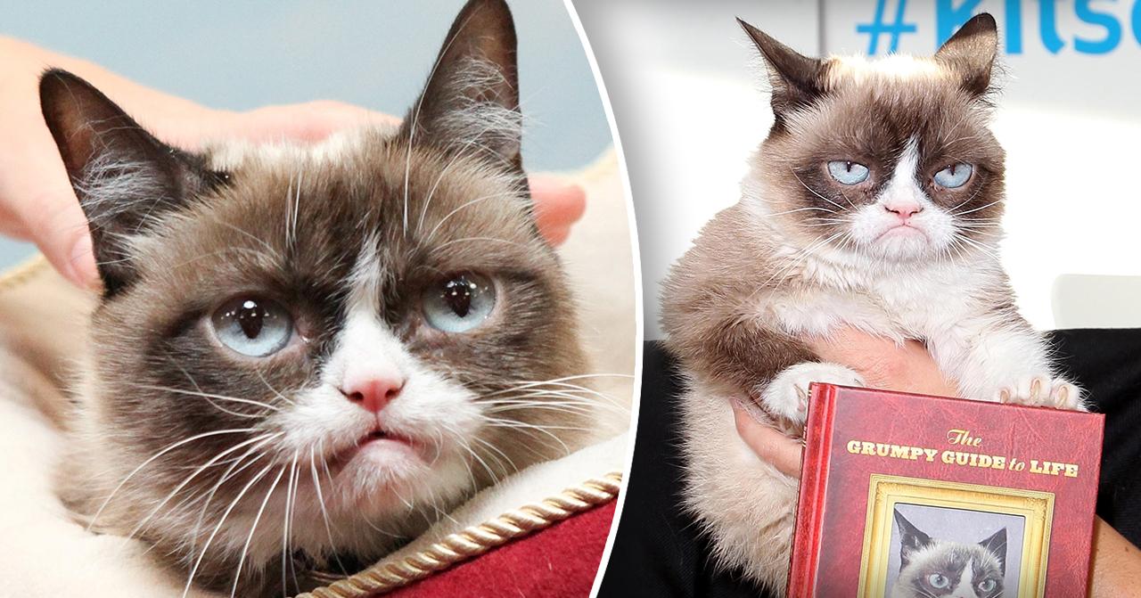 Grumpy cat är död
