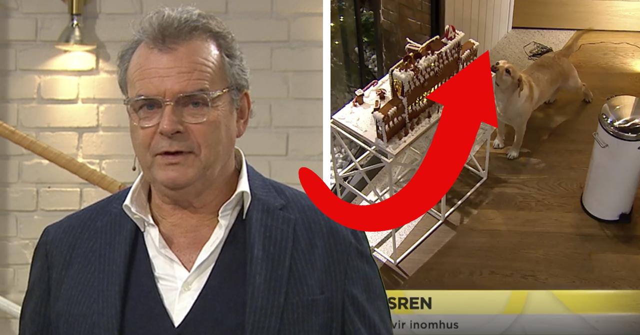 Steffo Törnquist i Nyhetsmorgon på TV4 med Lilla Nymo.