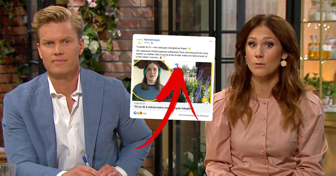 """Kritiken mot inslaget i Nyhetsmorgon – efter uppmaningen till TV4-tittarna: """"Nu får ni ge er"""""""