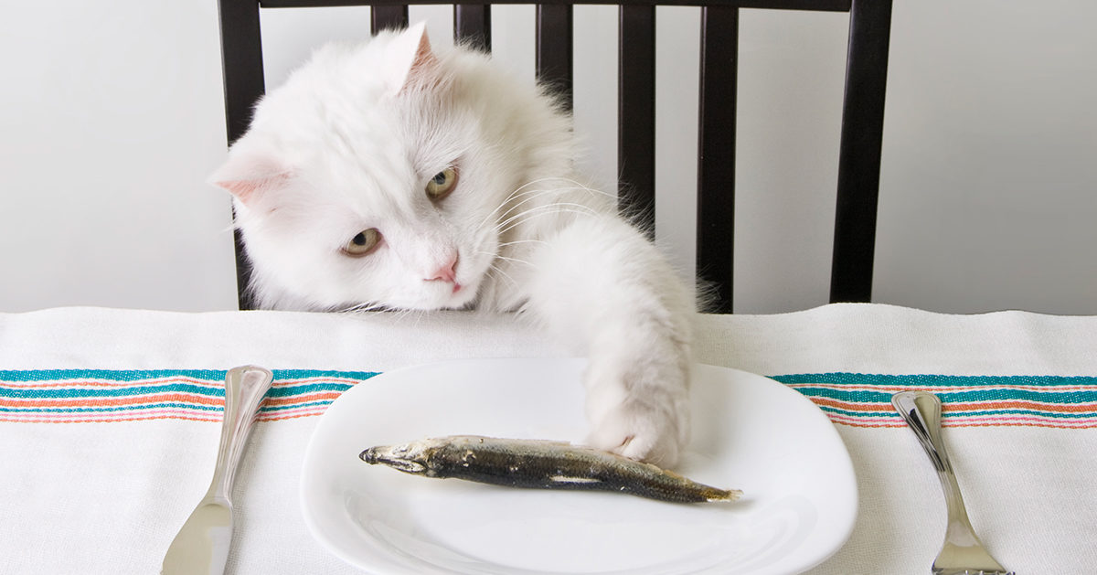 farlig mat för katter
